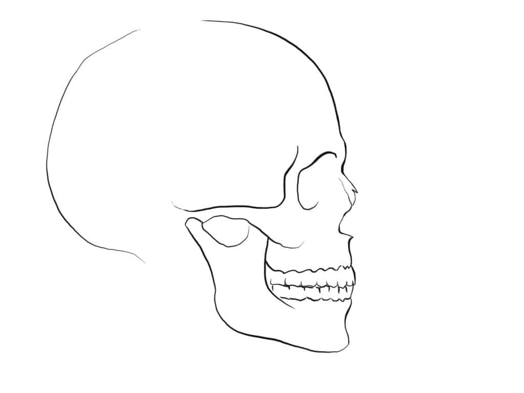 How to draw a Nose side view skull