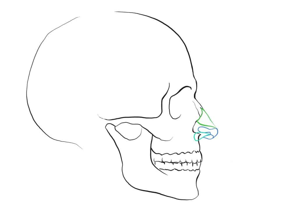 How to draw a nose Skull side view