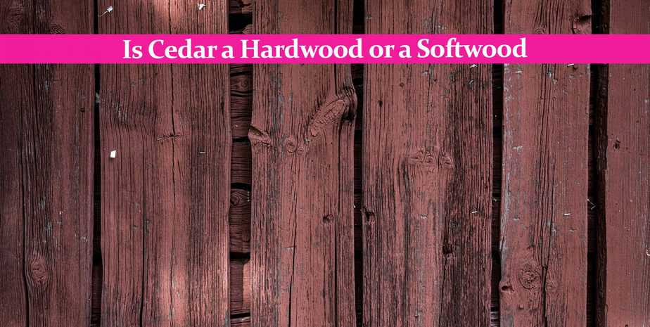 Is Cedar a Hardwood or a Softwood: A Comprehensive Answer